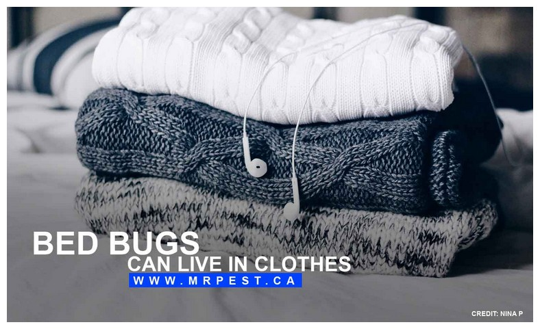 What To Do About Bed Bugs In Clothes