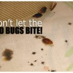 What To Do After A Bed Bug Treatment?