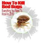 What Will Kill Bed Bugs And Their Eggs?