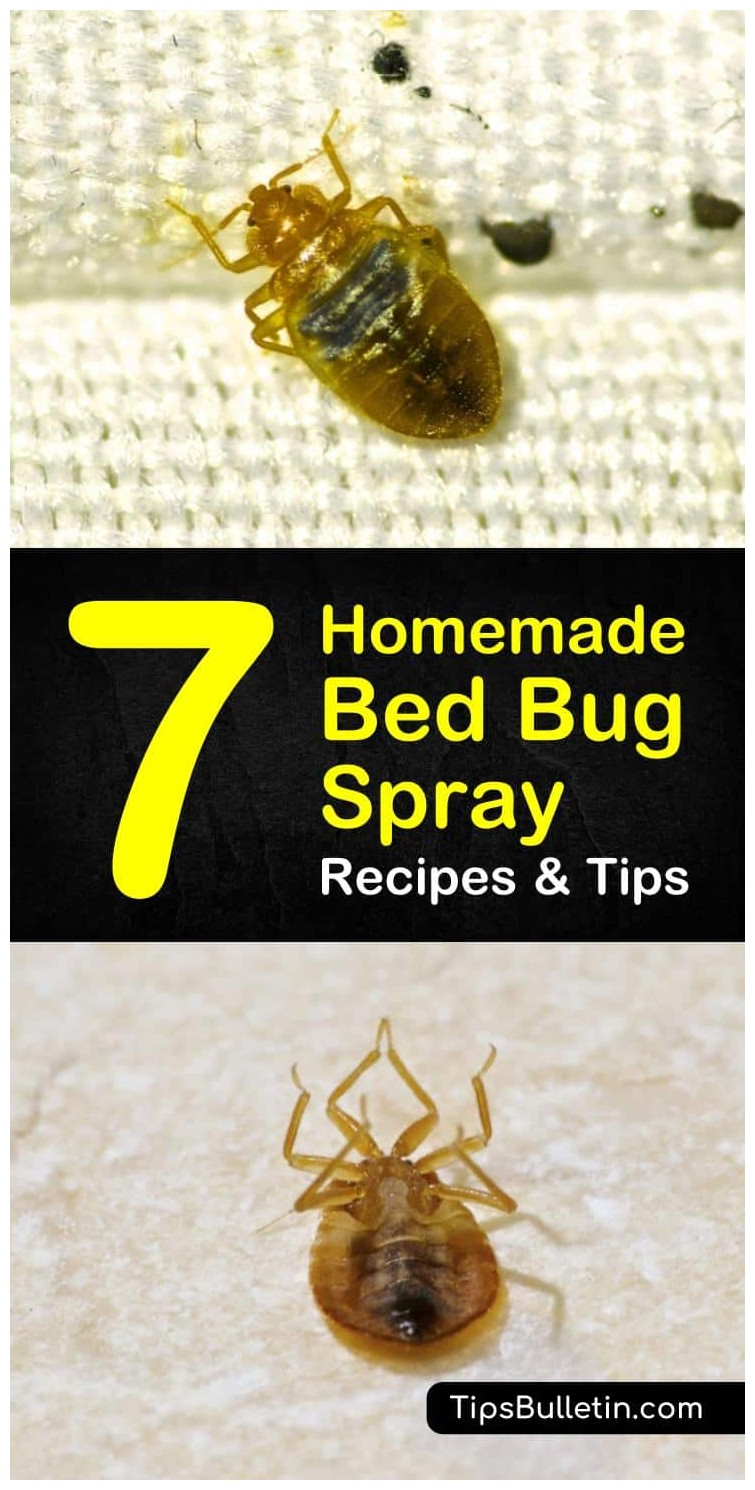 What Will Kill Bed Bugs Naturally