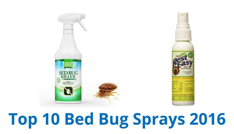 What's Good For Bed Bugs
