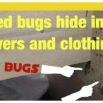 Will Bed Bugs Live In A Wood Furniture?