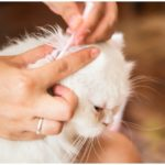 Ear Mite Treatment At Home