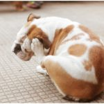 How To Get Rid Of Dog Mites Home Remedies?